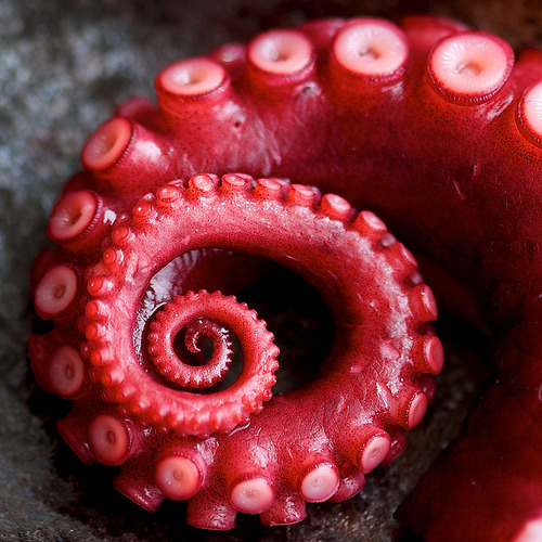 salveo:  Octopus tentacle by Gregory Thiell