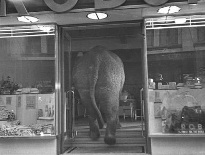dopissimo:  Elephant's tea party, Robur Tea Room, Sydney, 24 March 1939 / Sam Hood (par State Library of New South Wales collection)