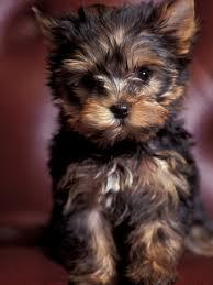 My Dream Dog <3 When I Get My Own Place This Dog Will Be My First Pet. =)