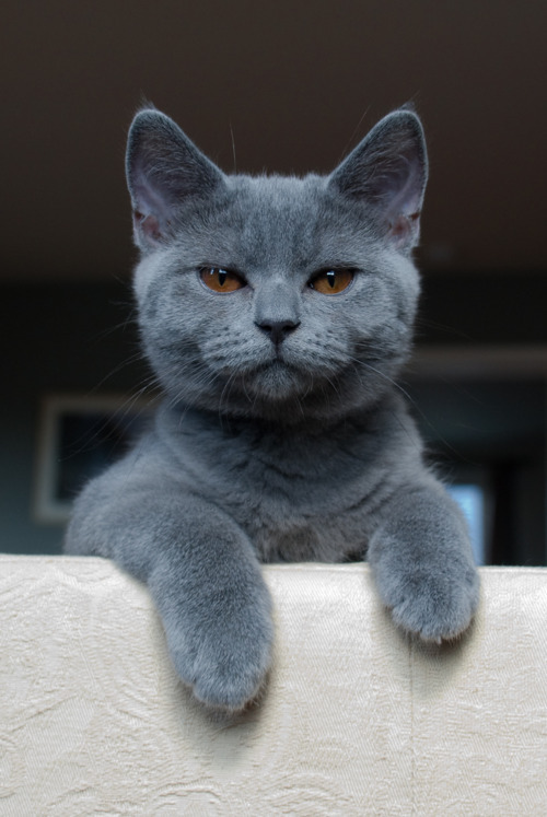 americangothgirl:  All cats are grey. ;)