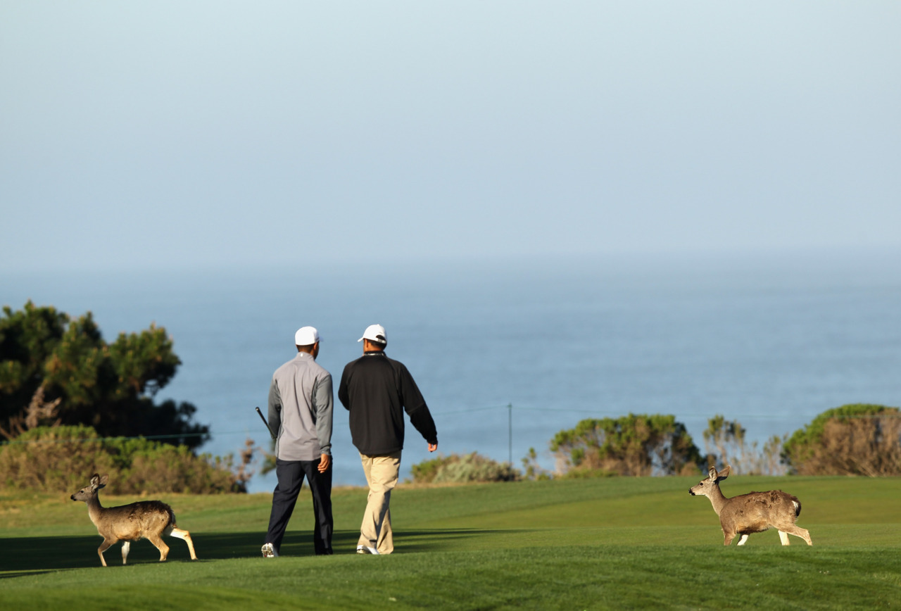 The deer at the Pebble Beach Pro-Am don't mind hanging around this kind of Tiger.