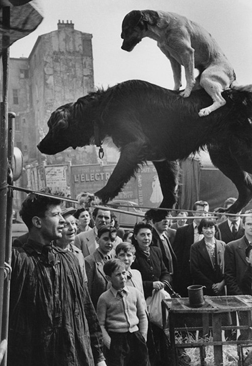 "tap1691:  Marc Riboud. ""Two Dog Acrobats"". 1953. Paris, France."