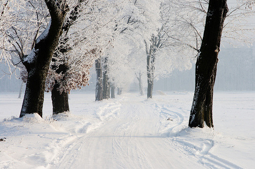 archenland:  wonderful winter (by (:Andrzej:))