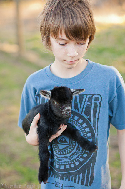 Trevor | Baby Goat on Flickr.Nikon D90 50mm ƒ/1.4G Natural Light