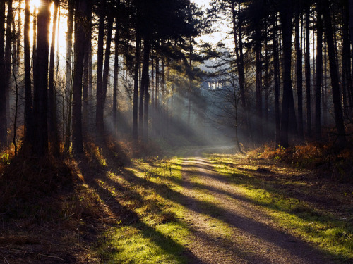 writersdonthaveblogs:  Rays of Light in Sherwood Forest by DaveKav on Flickr.