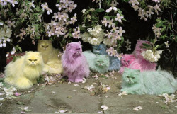 piahabekost:  Pastel Cats by Tim Walker