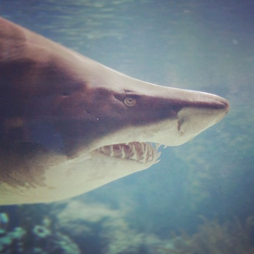 #shark  (Taken with instagram)