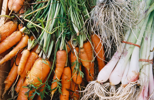 communitymarkets:  How to Store Vegetables Without Plastic   So you've got all these great fruits and vegetables and now we're going to help you keep them at their freshest with these tips. These tips are from the Berkley Farmer's Market which is a Zero Waste market! Here is a printable PDF of their original tip sheet. In the works here at Washington's Green Grocer is a switch from plastic bags (although we use as few as we can get away with, while still keeping your produce from getting battered on it's way to you) to only recyclable paper and reuseable cloth bags!   How to Store Vegetables without Plastic Artichokes‐ place in an airtight container sealed, with light moisture. Asparagus‐ place them loosely in a glass or bowl upright with water at room temperature. (Will keep for a week outside the fridge) Avocados‐ place in a paper bag at room temp. To speed up their ripening‐ place an apple in the bag with them. Arugula‐ arugula, like lettuce, should not stay wet! Dunk in cold water and spin or lay flat to dry. Place dry arugula in an open container, wrapped with a dry towel to absorb any extra moisture. Basil‐ is difficult to store well. Basil does not like the cold, or to be wet for that matter. The best method here is an airtight container/jar loosely packed with a small damp piece of paper inside‐left out on a cool counter. Beans, shelling‐ open container in the fridge, eat ASAP. Some recommend freezing them if not going to eat right away Beets‐ cut the tops off to keep beets firm, (be sure to keep the greens!)by leaving any top on root vegetables draws moisture from the root, making them loose flavor and firmness. Beets should be washed and kept in and open container with a wet towel on top. Beet greens‐ place in an airtight container with a little moisture. Broccoli‐ place in an open container in the fridge or wrap in a damp towel before placing in the fridge. Broccoli Rabe‐ left in an open container in the crisper, but best used as soon as possible. Brussels Sprouts‐ If bought on the stalk leave them on that stalk. Put the stalk in the fridge or leave it on a cold place. If they're bought loose store them in an open container with a damp towel on top. Cabbage‐ left out on a cool counter is fine up to a week, in the crisper otherwise. Peel off outer leaves if they start to wilt. Cabbage might begin to loose its moisture after a week , so, best used as soon as possible. Carrots‐ cut the tops off to keep them fresh longer. Place them in closed container with plenty of moisture, either wrapped in a damp towel or dunk them in cold water every couple of days if they're stored that long. Cauliflower‐ will last a while in a closed container in the fridge, but they say cauliflower has the best flavor the day it's bought. Celery‐ does best when simply places in a cup or bowl of shallow water on the counter. Celery root/Celeriac‐ wrap the root in a damp towel and place in the crisper. Corn‐ leave unhusked in an open container if you must, but corn really is best eaten sooner then later for maximum flavor. Cucumber‐ wrapped in a moist towel in the fridge. If you're planning on eating them within a day or two after buying them they should be fine left out in a cool room. Eggplant‐ does fine left out in a cool room. Don't wash it, eggplant doesn't like any extra moisture around its leaves. For longer storage‐ place loose, in the crisper. Fava beans‐ place in an air tight container. Fennel‐ if used within a couple days after it's bought fennel can be left out on the counter, upright in a cup or bowl of water (like celery). If wanting to keep longer than a few days place in the fridge in a closed container with a little water. Garlic‐ store in a cool, dark, place. Green garlic‐an airtight container in the fridge or left out for a day or two is fine, best before dried out. Greens‐ remove any bands, twist ties, etc. most greens must be kept in an air‐tight container with a damp cloth‐ to keep them from drying out. Kale, collards, and chard even do well in a cup of water on the counter or fridge. Green beans‐ they like humidity, but not wetness. A damp cloth draped over an open or loosely closed container. Green Tomatoes‐ store in a cool room away from the sun to keep them green and use quickly or they will begin to color. Herbs- a closed container in the fridge to kept up to a week. Any longer might encourage mold. Lettuce‐ keep damp in an airtight container in the fridge. Leeks‐leave in an open container in the crisper wrapped in a damp cloth or in a shallow cup of water on the counter (just so the very bottom of the stem has water). Okra‐ doesn't like humidity. So a dry towel in an airtight container. Doesn't store that well, best eaten quickly after purchase Onion‐ store in a cool, dark and dry, place‐ good air circulation is best, so don't stack them. Parsnips‐an open container in the crisper, or, like a carrot, wrapped in a damp cloth in the fridge. Potatoes‐ (like garlic and onions) store in cool, dark and dry place, such as, a box in a dark corner of the pantry; a paper bag also works well. Radicchio‐ place in the fridge in an open container with a damp cloth on top. Radishes‐ remove the greens (store separately) so they don't draw out excess moisture from the roots and place them in a open container in the fridge with a wet towel placed on top. Rhubarb‐wrap in a damp towel and place in an open container in the refrigerator. Rutabagas‐ in an ideal situation a cool, dark, humid root cellar or a closed container in the crisper to keep their moisture in. Snap peas‐ refrigerate in an open container Spinach‐ store loose in an open container in the crisper, cool as soon as possible. Spinach loves to stay cold. Spring onions‐ Remove any band or tie and place in the crisper. Summer Squash‐ does fine for a few days if left out on a cool counter, even after cut. Sweet peppers‐ Only wash them right before you plan on eating them as wetness decreases storage time. Store in a cool room to use in a couple a days, place in the crisper if longer storage needed. Sweet Potatoes‐ Store in a cool, dark, well‐ventilated place. Never refrigerate‐‐sweet potatoes don't like the cold. Tomatoes‐ Never refrigerate. Depending on ripeness, tomatoes can stay for up to two weeks on the counter. To hasten ripeness place in a paper bag with an apple. Turnips‐ remove the greens (store separately) same as radishes and beets, store them in an open container with a moist cloth. Winter squash‐store in a cool, dark, well ventilated place. Many growers say winter squashes get sweeter if they're stored for a week or so before eaten. Zucchini‐ does fine for a few days if left out on a cool counter, even after cut. Wrap in a cloth and refrigerate for longer storage.
