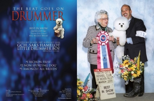 We found a bunch of show-dog 'for your consideration' ads. Drummer's wins.
