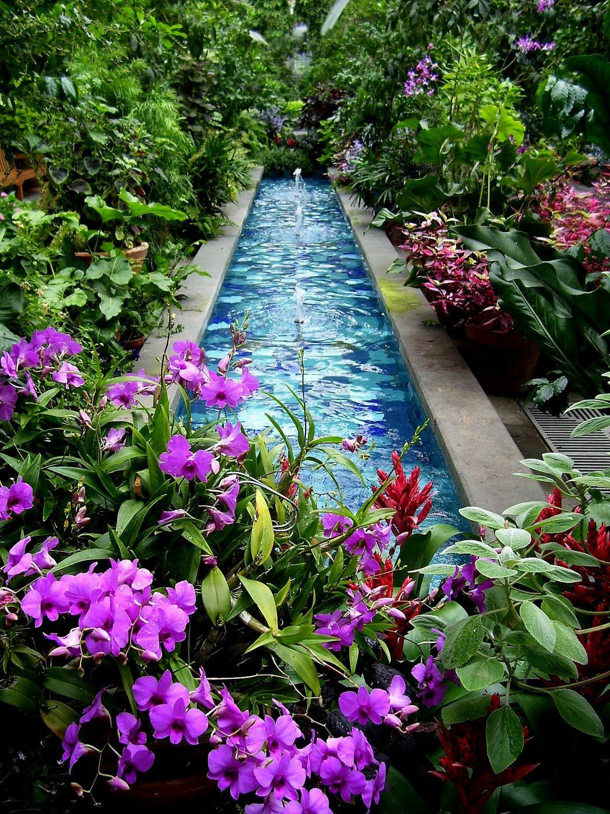 green-home:  meditation pond / green-home