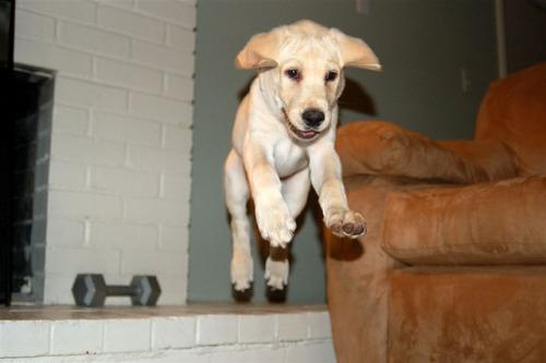 Flying Dog! on Flickr.