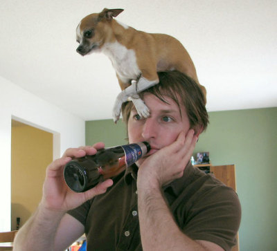 Via: http://www.linein.org/blog/2008/03/25/a-chihuahua-is-not-a-hat/
