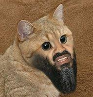 Meow Ladies Fear My Cat Beard