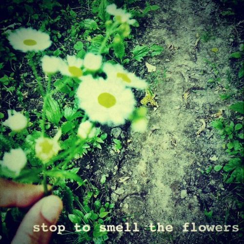 always stop to smell the flowers. unless they're poisonous. life's too short to smell mediocre.