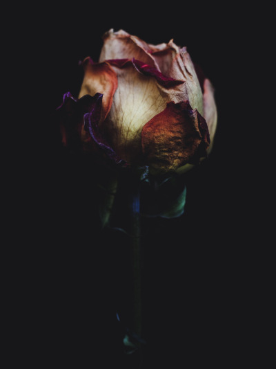 marrypotter:  Billy Kidd:  Decaying rose was shot by Billy Kidd.