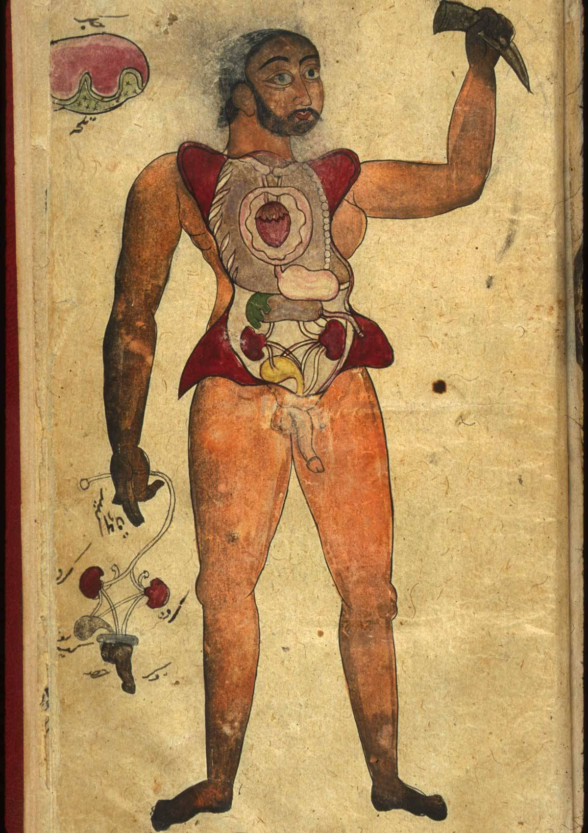 persian anatomical illustrations