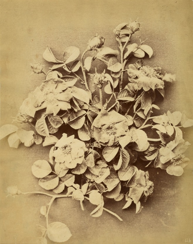 134 (Still Life With Roses), Anonymous Photograph, Circa 1880