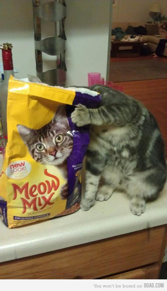 getoutoftherecat:  get out of there cat. wait…. how did you get in there? and where is all the food? now i know how you gained 5 lbs overnight.