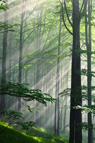 m-a-p-s:  Fleeting beams (by Evgeni Dinev)