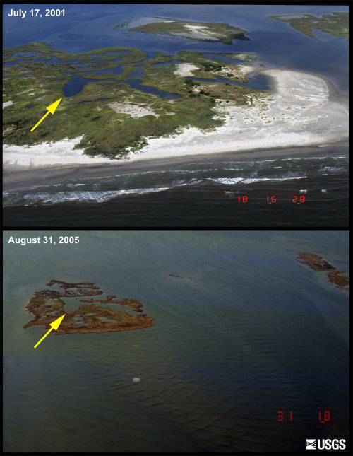 uniformitarianism:  An interesting photo from USGS showing what impact severe storms can have on geomorphology. The photo shows part of the Chandeleur Islands; a north-south oriented chain of low-lying islands located approximately 100 kilometers east of the city of New Orleans, Louisiana. The first image, taken in July 2001, shows narrow sandy beaches and adjacent overwash sandflats, low vegetated dunes, and backbarrier marshes broken by ponds and channels. The second image shows the same location on August 31, 2005, two days after Hurricane Katrina made landfall on the Louisiana and Mississippi coastline. Storm surge and large waves from Hurricane Katrina submerged the islands, stripped sand from the beaches, and eroded large sections of the marsh. Today, few recognisable landforms are left on the Chandeleur Island chain (USGS, 2010). If you're interested in this kind of thing, follow the link (or click the photo) and you'll find many more photos like this, along with some interesting info!