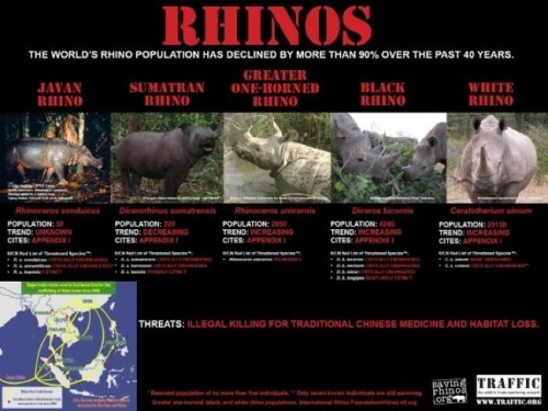 ECO NEWS: International Rhino Music Day In order to raise awareness for the threatened rhinos, musicians and poets in Kenya, New Zealand, and South Africa will be volunteering their time this weekend, February 11th, for the first annual International Rhino Music Day