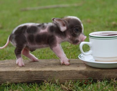 tjradford:  I want this pig!!!