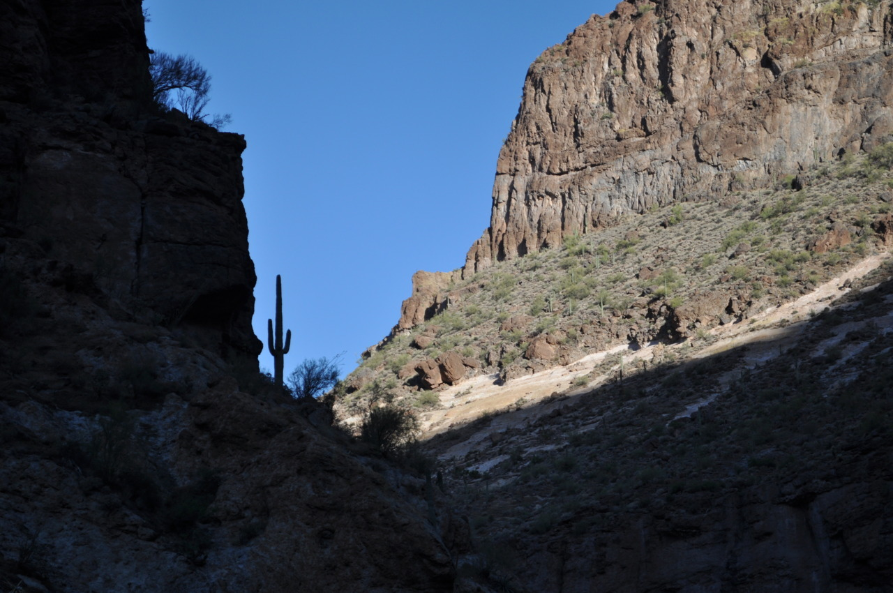 Saguaro cactus growing up rocky cliff bank of Canyon Lake, Arizona - 28 May, 2010.