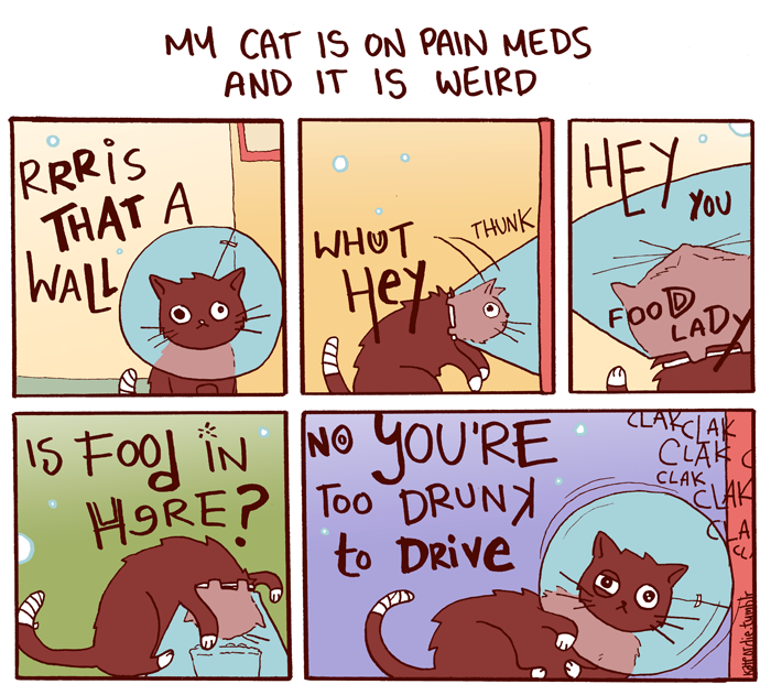 New Comic Day, at last! My cat is high as balls.