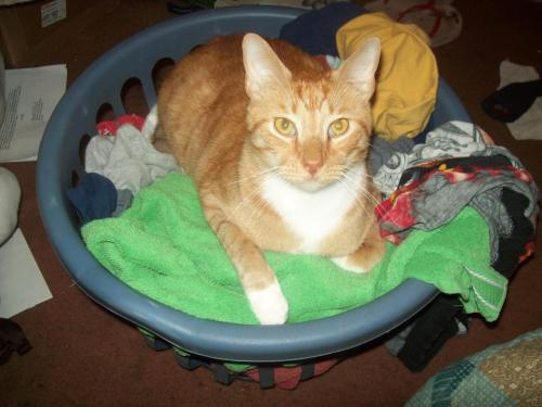 don't look at me like that cat. you are not and will never be laundry.