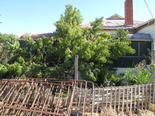 Abandoned house with peach tree.Swan Hill.Vic.Australia.2012
