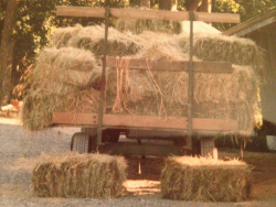 Bales of hay at OLR. Beautiful!
