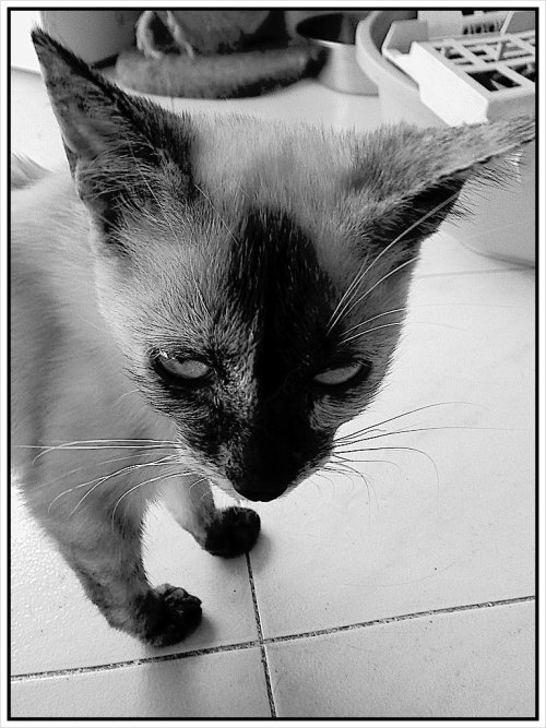 You talkin' to me? (Taken with picplz.)