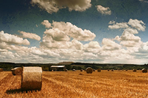 FielD on a suMMer daY by Dyrk.Wyst on Flickr.