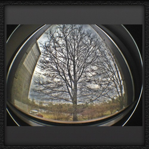 Looking out a window on campus. #tree #fisheye #hdr (Taken with instagram)