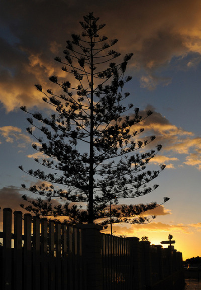 Gran Canarian Sunset by rosyrosie2009 on Flickr.