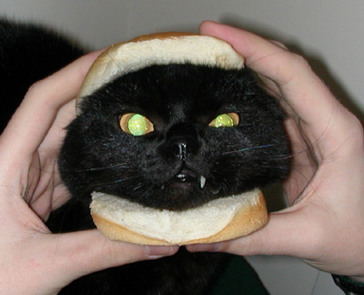 bunnyfood:  catburger  That burger will bite your fucking face off.