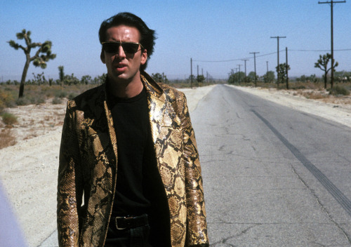 The Nic Cage Project: Wild at Heart To celebrate TIFF's ongoing Bangkok Dangerous: The Cinema Of Nicolas Cage series, Alan Jones has resurrected his retrospective of the actor's work entitled The Nic Cage Project. In this edition, Jones analyzes David Lynch's violent road trip Wild at Heart – playing tonight at the Lightbox.