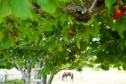 Camped at a cherry orchard/farm with the owners permission.  Occasionally if it's to populated I find a nice spot and ask to camp. They never said no.