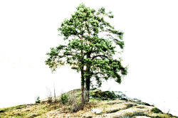 lonesome-pine-sandvika-january-2012