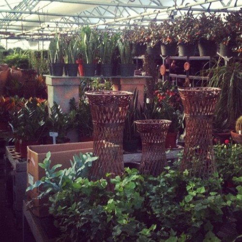 Went to a greenhouse today for therapy against 11 degree temperature. :) (Taken with instagram)