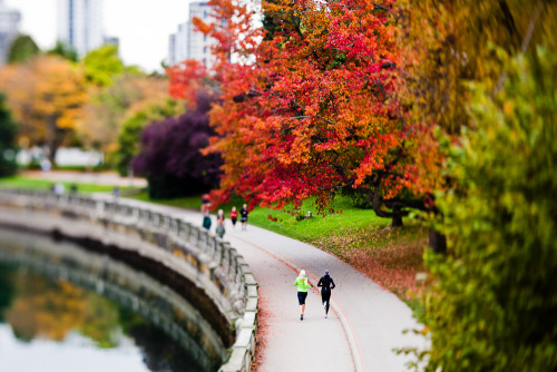danbarham:  Stanley Park, Vancouver in the Fall.