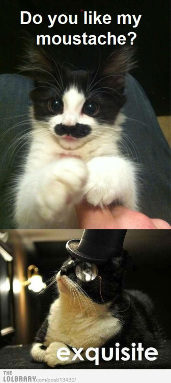 ittfunnyassshit:  Classy Cats Follow this blog for the best new funny pictures every day