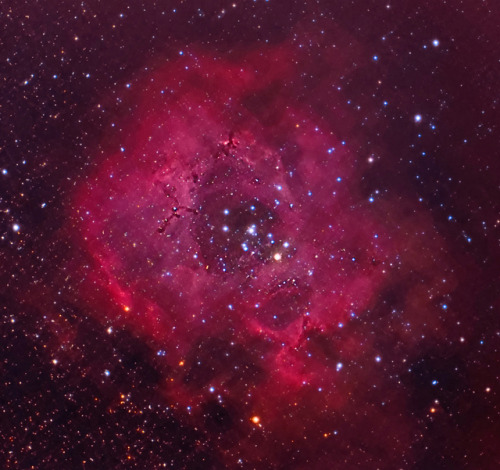 spacettf:  Rosette Nebula by mylotian on Flickr.  Looks like a rose. You may want to give this nebula to someone this valentine ;D