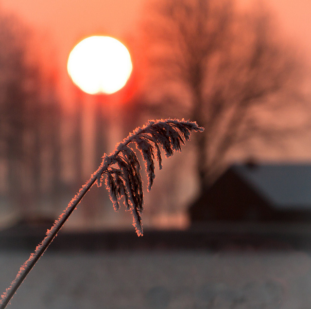 Morning frost by 50D-Ray on Flickr.