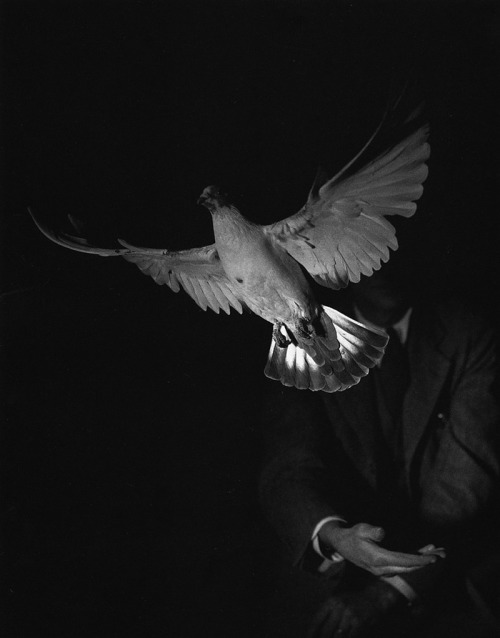 Harold Edgerton, Rising Dove, 1934