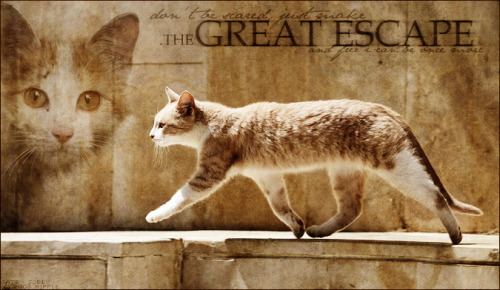 .the GREAT ESCAPE by ~Ripplepelt (something I made like 3 years ago)