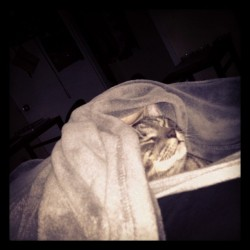 It was so cold this morning, even Phineas was under the blankets! (Taken with instagram)