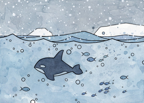 The first of a new arctic animal series.Killer Whale watercolor illustration
