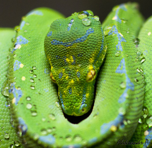 Beautiful Emerald Snake | Popular Photography Contest 2012