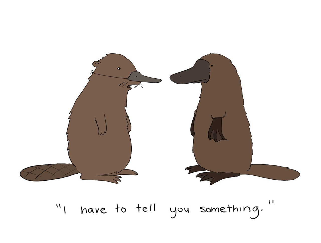 14 Days of Love  (barf) Day Twelve:  Honesty  © Liz Climo
